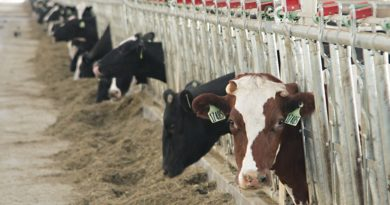 Пензенская область вошла в число лидеров в РФ по производству скота и птицы на убой