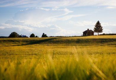 Пензенские аграрии оштрафованы за неэффективное использование земель