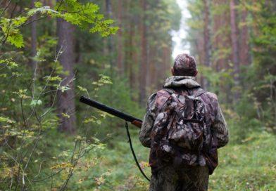 В Пензенской области изменили сроки охоты на копытных
