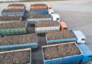 В Пензенской области собрали более 1,5 млн тонн сахарной свеклы