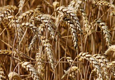 Вырос объем экспорта пензенской сельхозпродукции