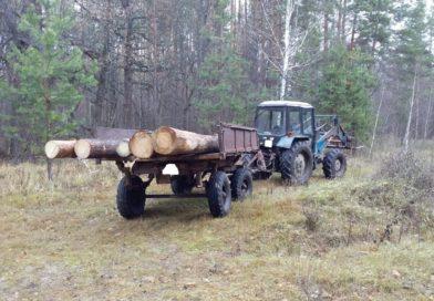 В Городищенском районе незаконно вырубили деревья