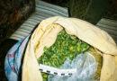 У кузнечанина нашли более 2 кг растительного наркотика
